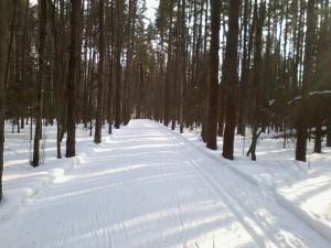 Красивые сосны и хорошая лыжня в Яковлевском бору
