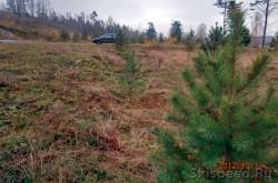 Высадка деревьев в Демино