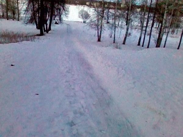 Лыжня в березовой роще