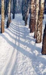 Лыжня от Молота до Тенина