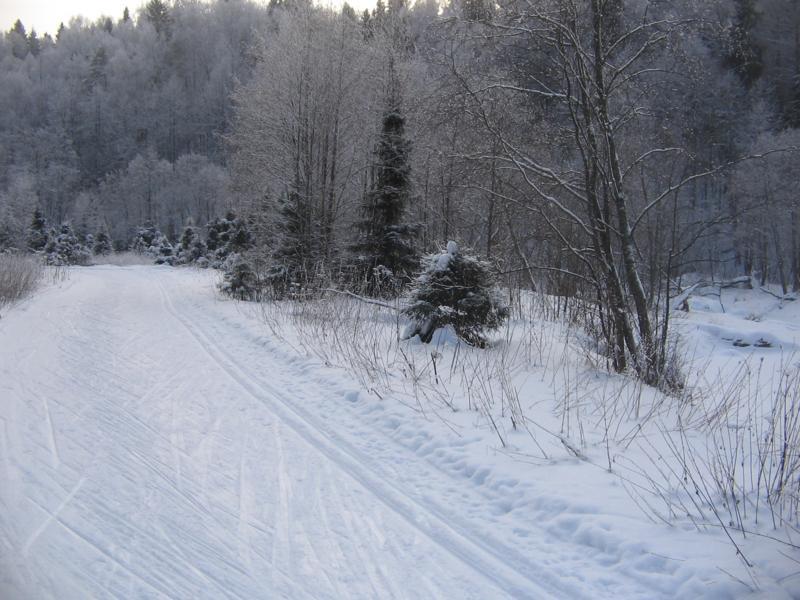 Лыжня на берегу реки Талица