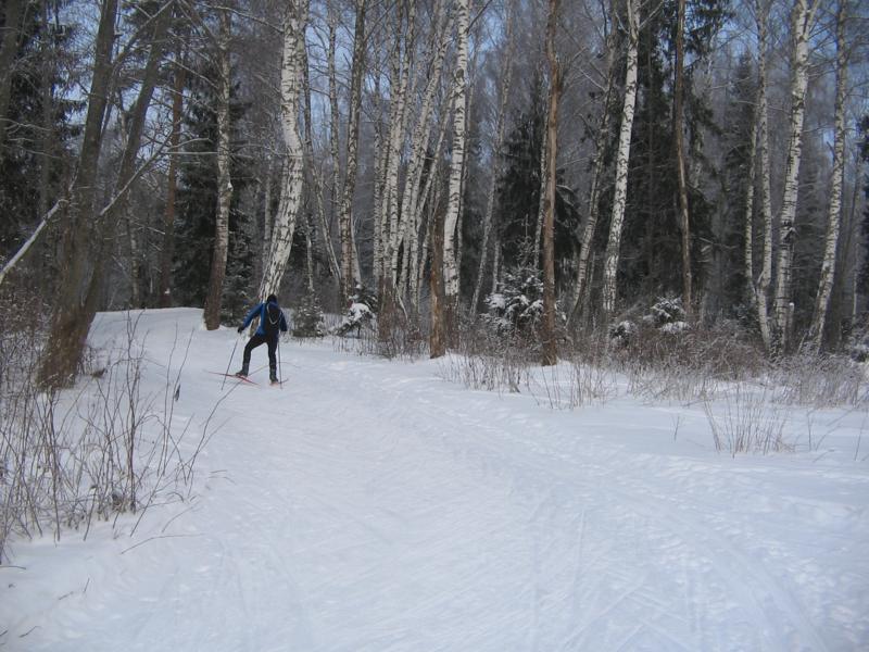 Лыжня в Белкино Первый подьем в березках
