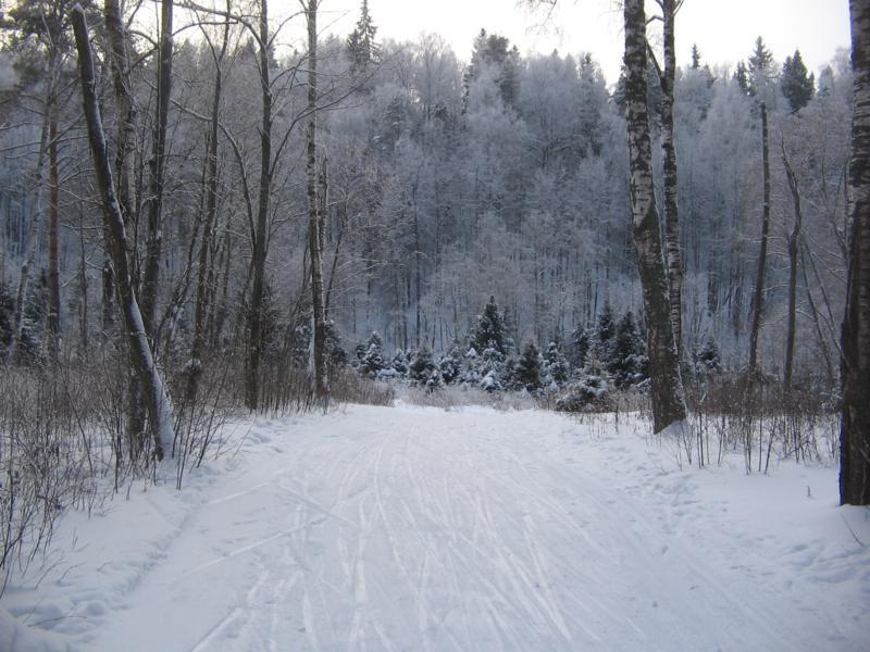 Лыжня в Белкино Суск в березках