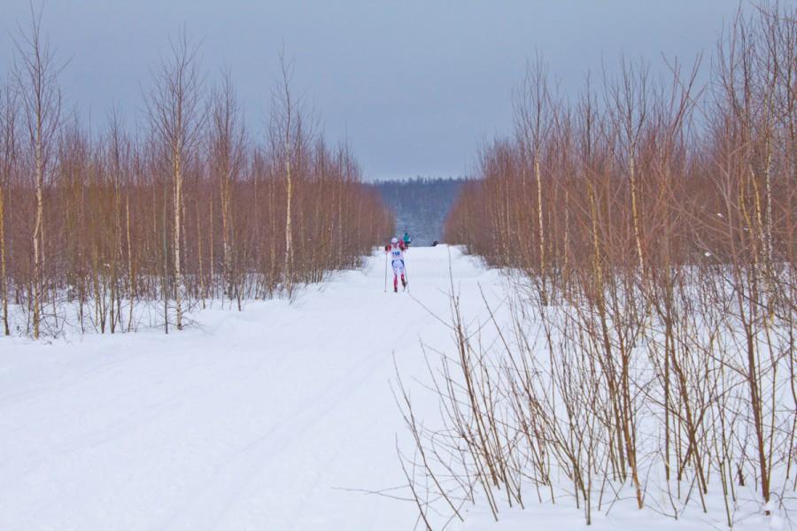 Когда в Незнаново хорошая погода, голубое небо и скрипит снег - в этой роще получаются красивые фотки.. Из за горизонта по лыжне стараются бегут спортсмены..
