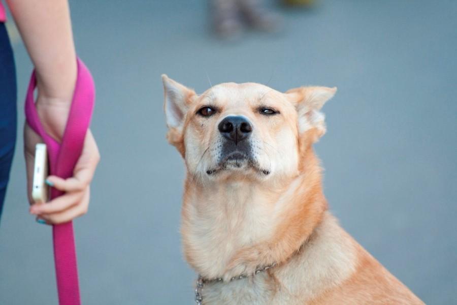 Собака, стоящая рядом с нами, и то, что то говорила на своем собачьем языке!