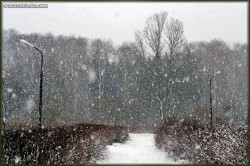 Фото - Идёт снег на улице