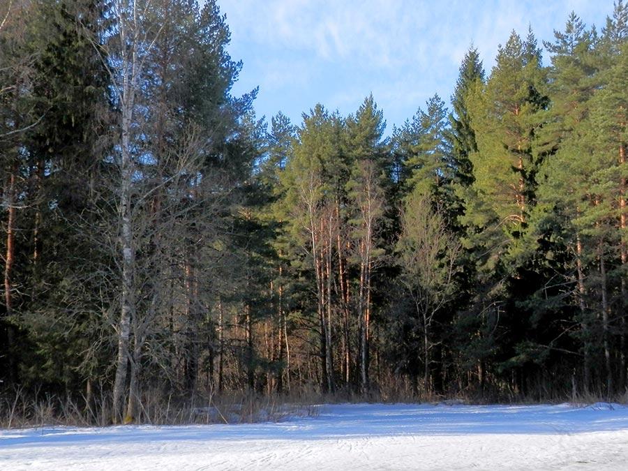 Фото - Лыжная трасса на Косарке, Переславль-Залесский