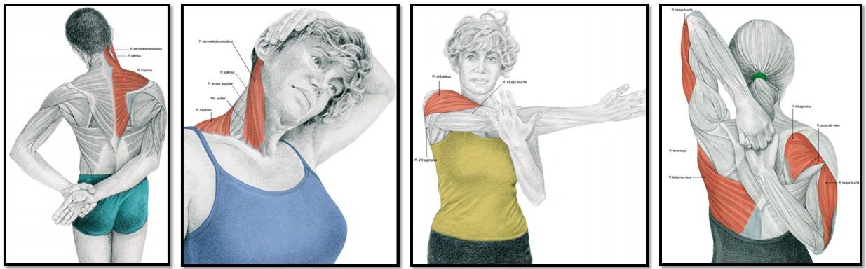Растяжка мышц - фото