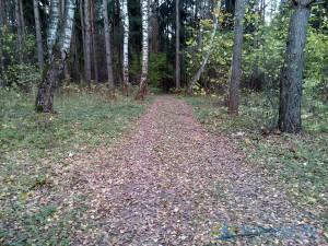 Фото тренировочной трассы в михайловском лесу Ярославского района