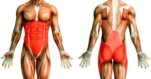 Фото - Мышцы человека