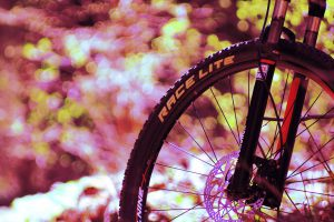 Фото колеса велосипеда - Тренировочная трасса в Михайловском лесу