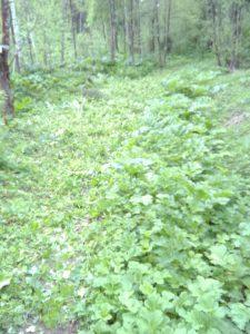 Фото просеки в лесу - Тренировочная трасса в Михайловском лесу, Ярославский р-н