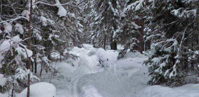Фото в лесу - Лыжная трасса в Угличе, Ярославская обл.