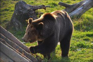 Фото животных - Экскурсия в Ярославский зоопарк