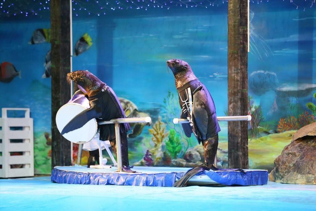 Фото представления - Ярославский дельфинарий