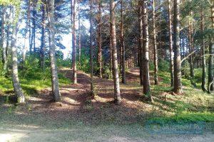 Фото природы леса - Дистанция велогонки кросс-кантри в Рыбинске