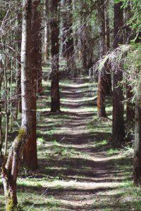 Фото леса - Михайловский лес. Трасса для тренировок в Ярославле