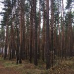 Прусовские карьеры. Фотография в лесу. Ярославль